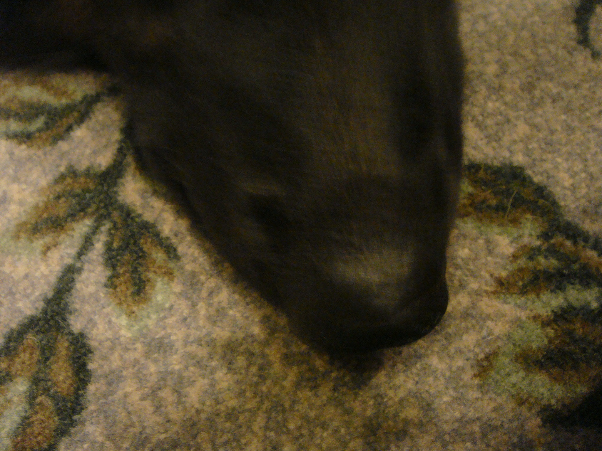 Dog Upset Stomach Withhold Food